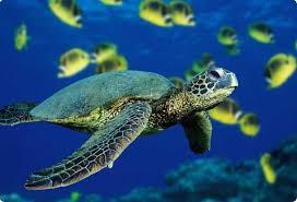 السلحفاة البحرية