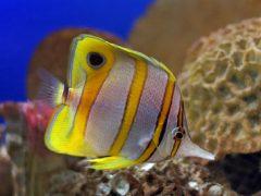 انواع السمك البحري