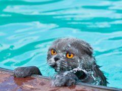 لماذا تخاف القطط من الماء وتكره الاستحمام ؟