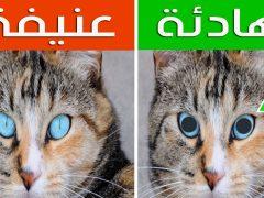 علامات خفيه عن القطط