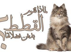 لماذا تقوم القطط بدفن فضلاتها